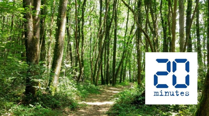 Avec EcoTree, vous achetez un arbre tout en gagnant de l'argent