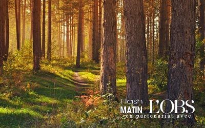 La bonne gestion forestière au service du développement durable