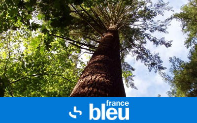 Ils sont fous ces Bretons - EcoTree invente le livret arbre