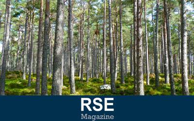 EcoTree, planter des arbres pour gagner de l'argent