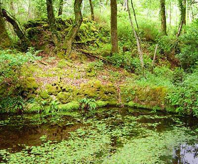 Contribuez à la biodiversité