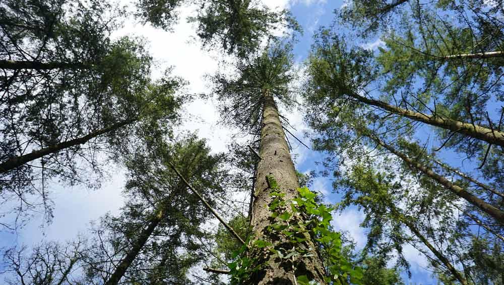Forêt de Brokus