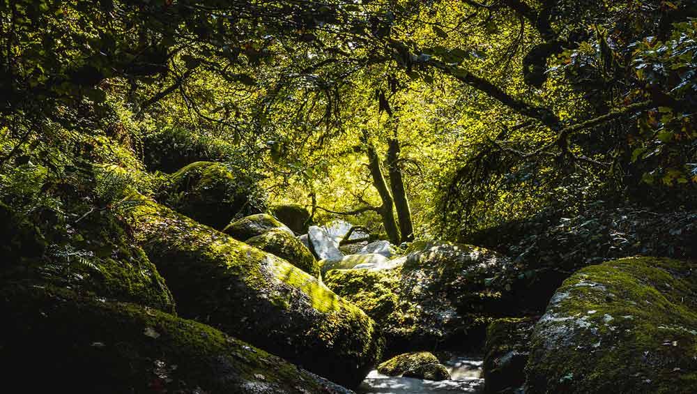 Forêt de Lanrivain et Plougernevel