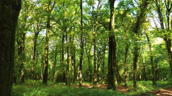 Forêt de Kerautret