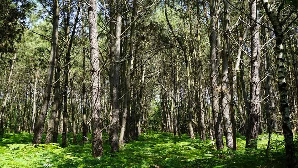 Forêt de la Faigne