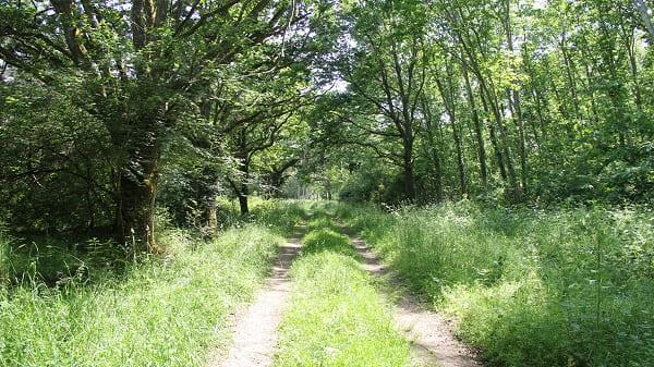 Forêt de Luthenay