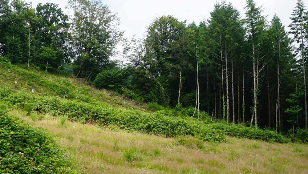 Forêt de Mariaker