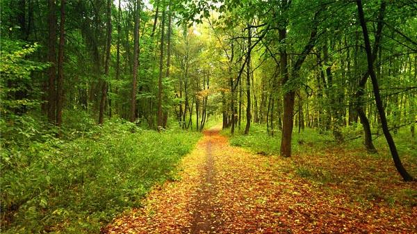 Forêt de Melrand