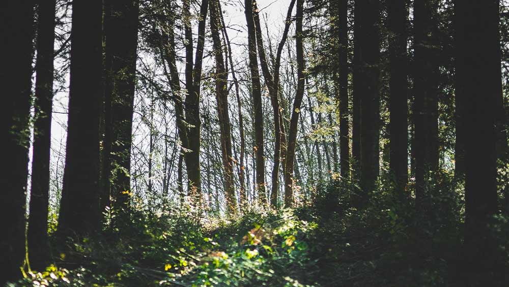 Forêt de Palotas