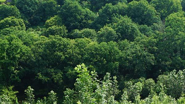 Forêt de Pleyben