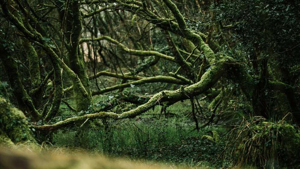 Forêt de Ploerdut