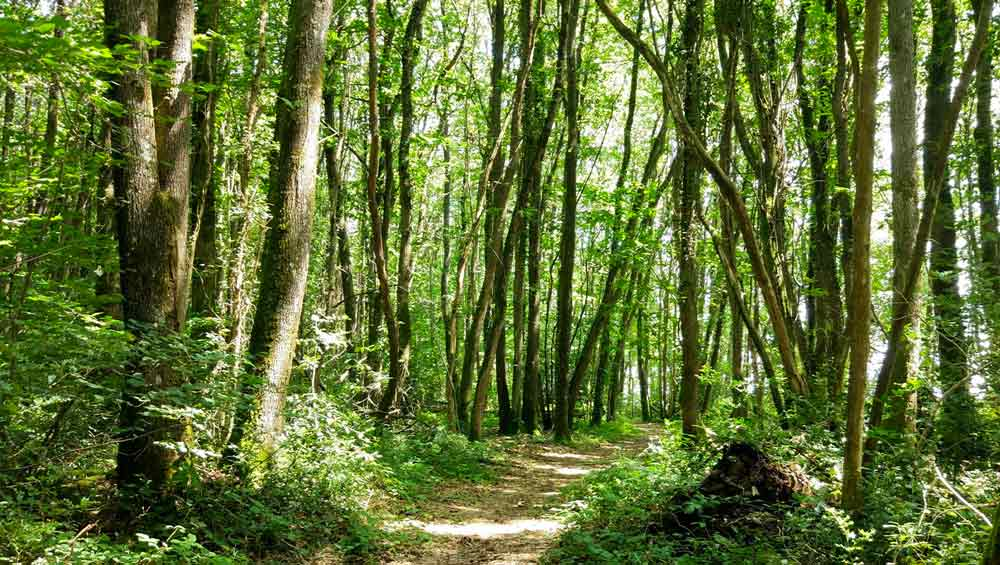 Forêt de Ruillé